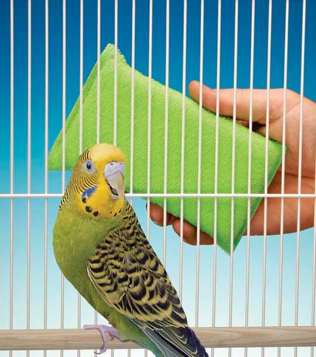 cleaning  Parakeet cage