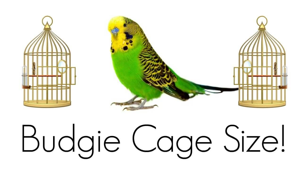budgie cage size