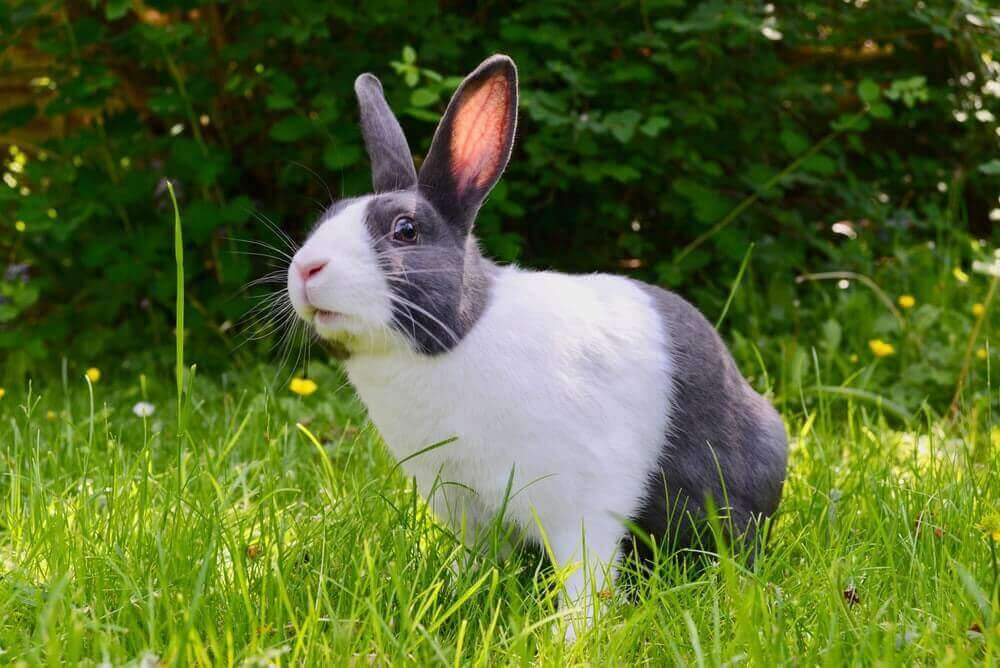 black and white rabbit on grass