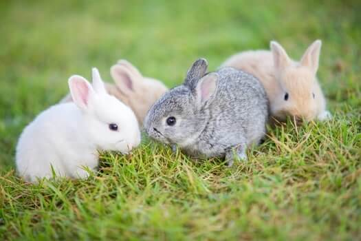 baby rabbits on grass