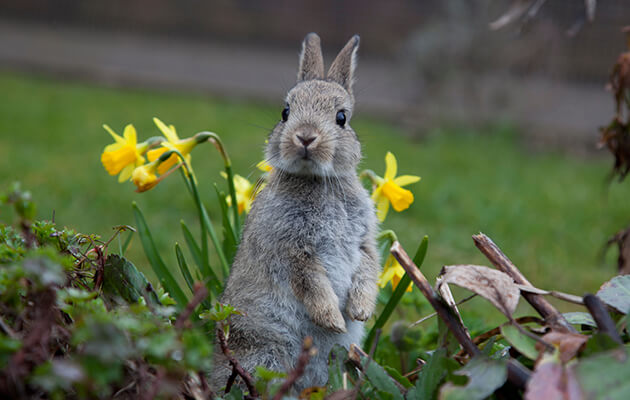 rabbit standing in garden